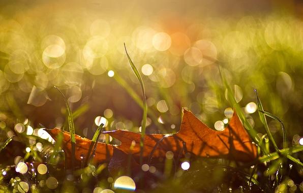 Picture autumn, grass, drops, macro, sheet, glare