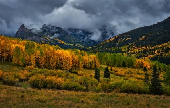 Picture autumn, forest, mountains, clouds, Colorado, USA, rainy day, San Juan Mountains