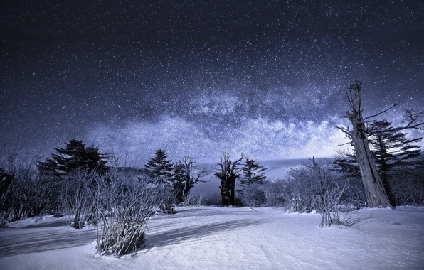 Picture winter, the sky, stars, snow, trees, landscape, night, Nature, the milky way, the bushes