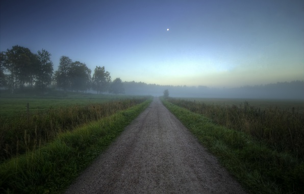 Picture road, field, forest, summer, fog, dawn, morning