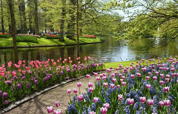Picture summer, water, flowers, pond, tulips, Park, Netherlands, Netherlands, Keukenhof, Garden of Europe