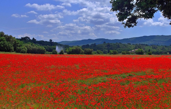 Picture field, the sky, grass, trees, flowers, mountains, hills, Maki, meadow, panorama