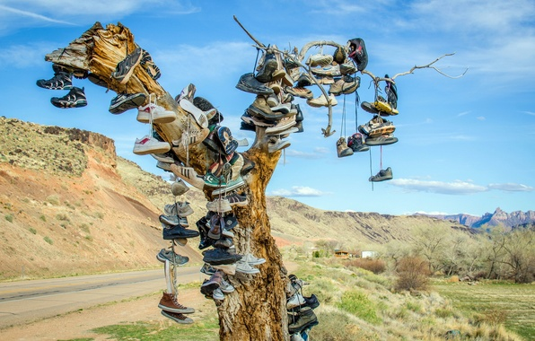 Picture tree, shoes, shoes