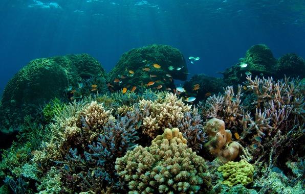 Picture sea, fish, the bottom, corals