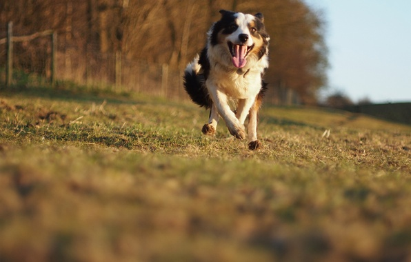 Picture each, movement, speed, dog, running