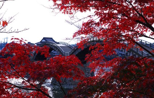 Picture trees, Japan, arched, The Kintai, wooden bridge, Kintai