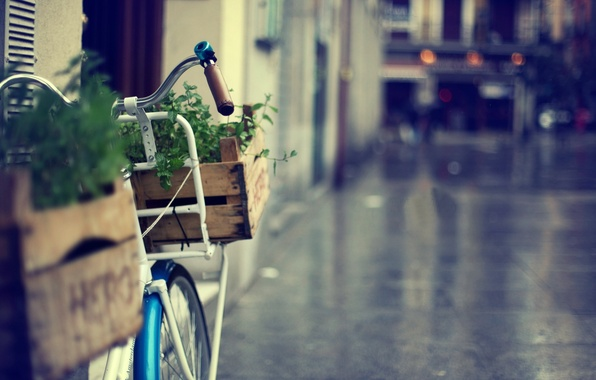 Picture greens, grass, flowers, bike, great, the city, background, Wallpaper, street, basket, blur, wallpaper, bicycle, basket, …