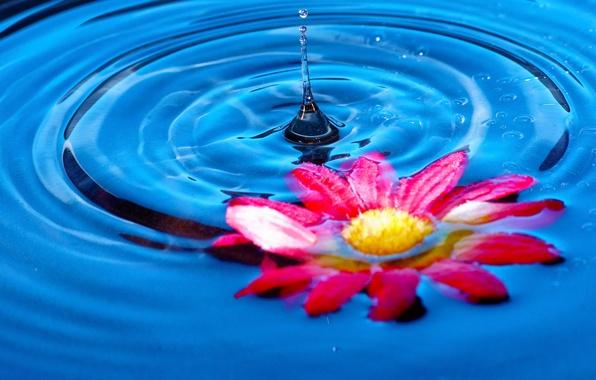 Picture flower, water, splash, petals