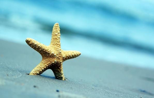 Picture sand, sea, beach, summer, nature, background, Wallpaper, blur, wallpaper, starfish, widescreen, background, full screen, HD …