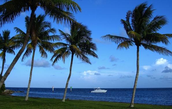 Picture tropics, palm trees, coast, Miami, FL, boat, Miami, Florida, The Atlantic ocean, Atlantic Ocean