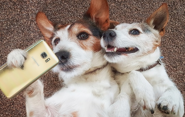 Picture dogs, mood, the situation, a couple, smartphone, selfie