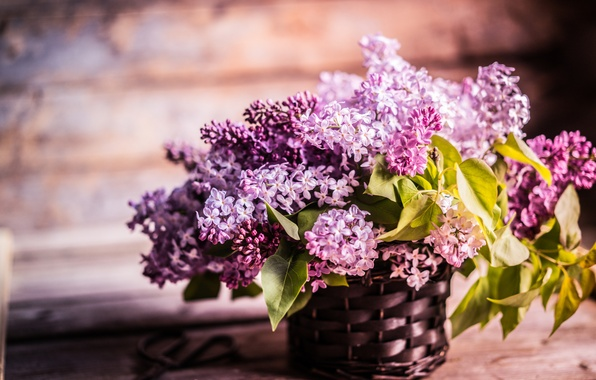 Picture flowers, branches, basket, Board, lilac