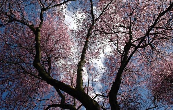 Photo wallpaper purple, the sky, trees, flowers