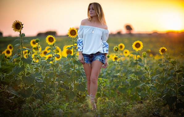 Picture field, summer, girl, sunflowers, shorts