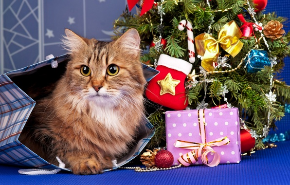 Picture cat, cat, holiday, toys, tree, new year, package, gifts, red