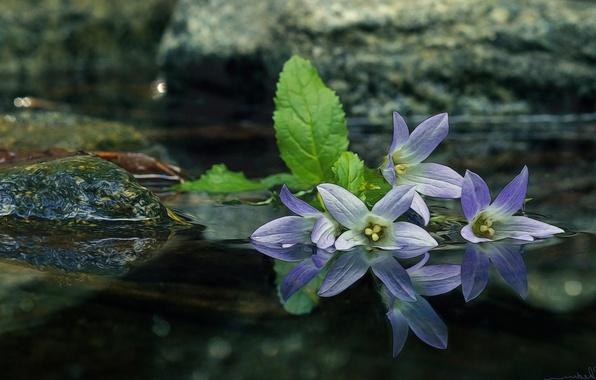 Picture water, macro, reflection, stones, bells