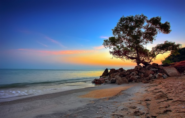 Picture sea, the sky, clouds, stones, tree, shore