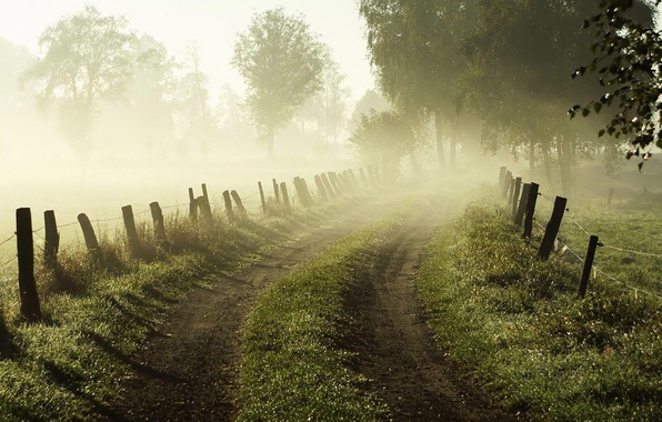 Picture road, grass, trees, nature, fog, dawn, the fence, fence, Morning