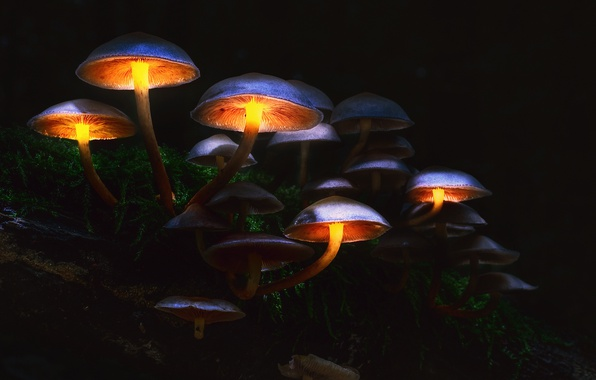 Picture autumn, forest, macro, light, the darkness, mushrooms