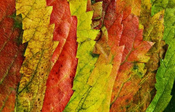 Picture autumn, leaves, macro, nature