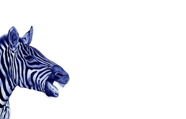 Picture white, background, black and white, Zebra, drawn