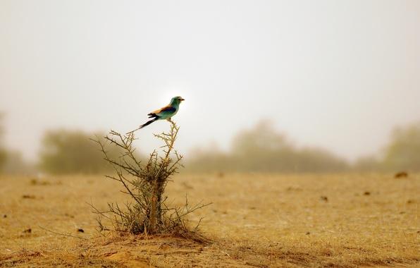 Picture bird, Bush, animals