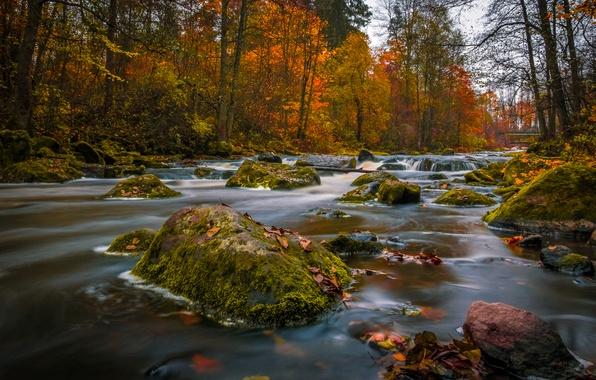 Picture autumn, forest, river, stones, Finland, Finland, Nukari