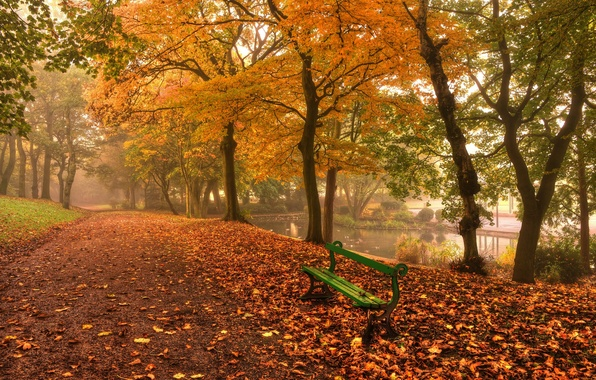 Picture autumn, leaves, water, trees, landscape, bench, nature, river, background, tree, widescreen, Wallpaper, trail, shop, track, …