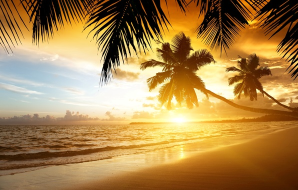 Picture sand, sea, beach, sunset, tropics, palm trees, shore, summer, beach, sea, ocean, coast, sunset, sand, …