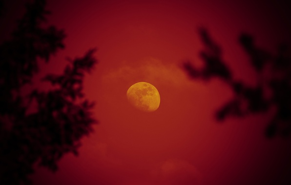 Picture the sky, trees, night, the moon, red moon
