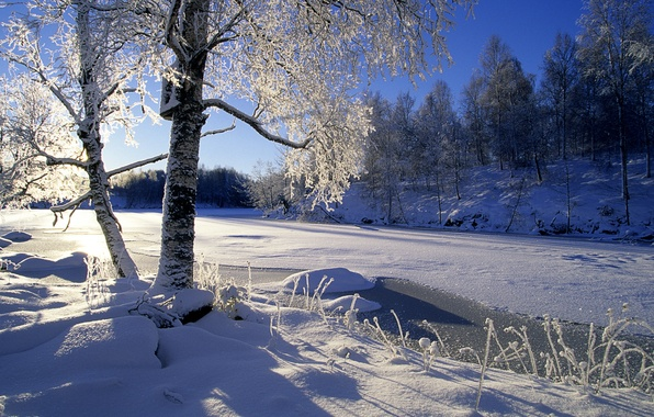 Picture winter, forest, the sun, snow, trees, river