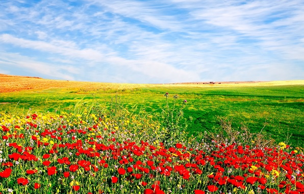 Picture NATURE, GRASS, HORIZON, The SKY, FIELD, CLOUDS, GREENS, FLOWERS, PLAIN, GREEN, DAL