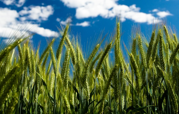 Picture the sky, clouds, spikelets, by Robin De Blanche, Clear Day