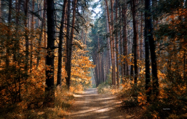 Picture road, autumn, forest, the sun, trees