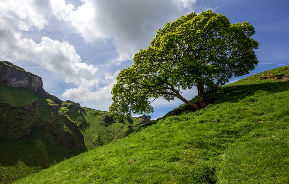 Picture the sky, grass, clouds, mountains, tree, slope