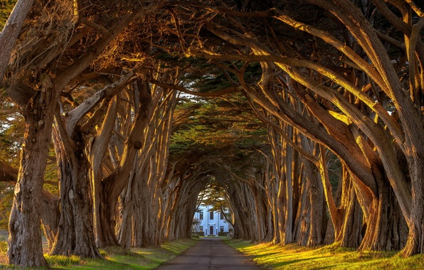 Picture summer, light, california, alley, trees, sunset, tree, station, tunnel, the estate, lervia, point, cypress, marconi, …