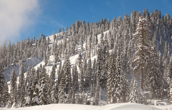 Picture winter, the sky, the sun, snow, trees, mountain, slope, CA, USA, Lassen Volcanic National Park