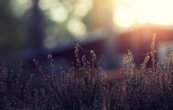 Picture grass, macro, flowers, glare, bokeh