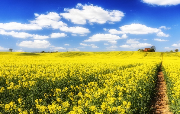 Picture field, the sky, clouds, flowers, house, path, rape