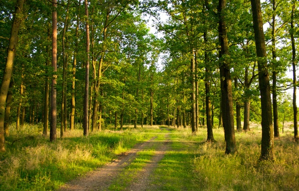 Picture road, summer, grass, light, trees, nature, trail, Forest