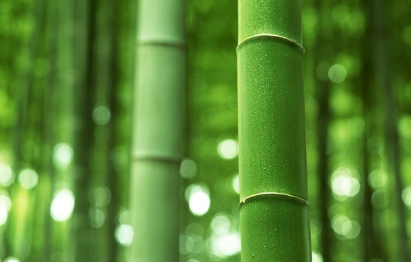 Picture bamboo, stem, trunk, green