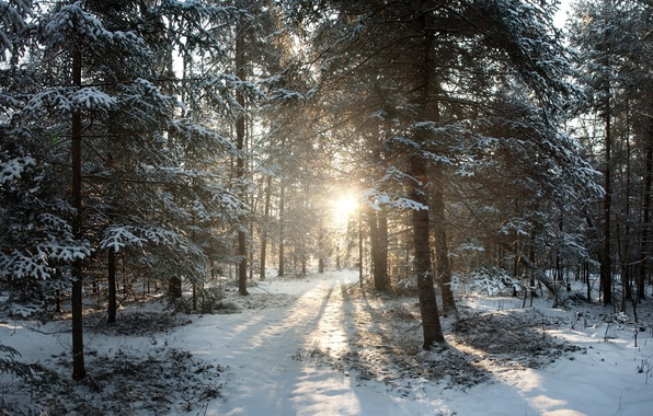 Picture winter, snow, sunrise, Wisconsin, United States, winter, Sunrise, Phillips, Northern Woods, Phillips, Wisconsin