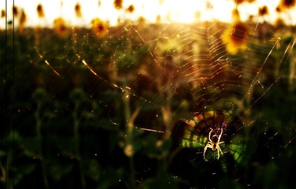 Picture web, scheme, Spider
