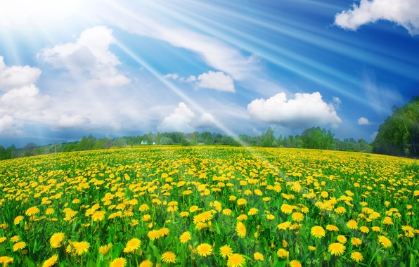 Picture summer, the sky, light, meadow, dandelions