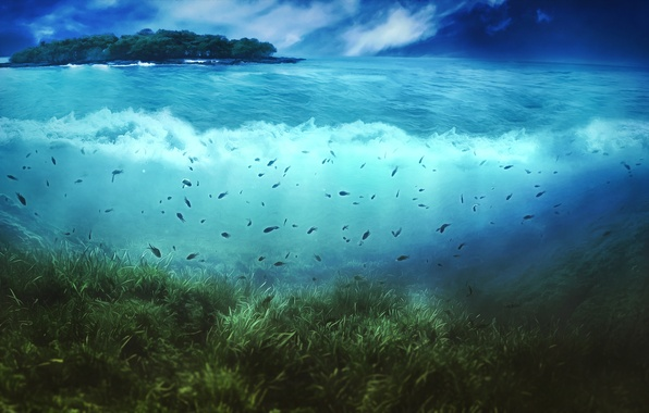 Picture the sky, water, clouds, fish, vegetation, island