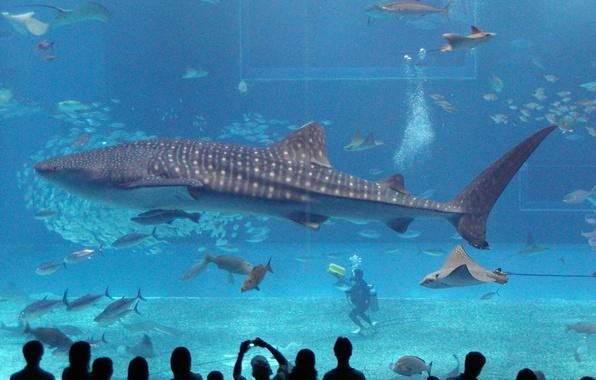 Picture Aquarium, Shark, Aquarium, Shark