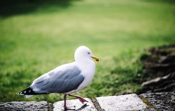 Photo wallpaper bird, legs, Seagull, feathers