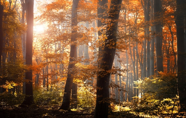 Picture autumn, forest, leaves, light, trees, nature, foliage, yellow, orange