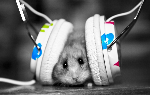 Picture music, mouse, headphones