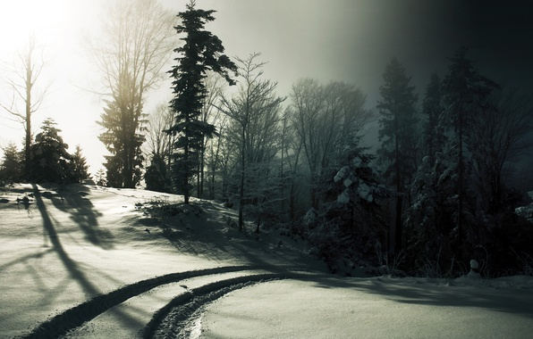 Picture winter, the sun, snow, trees, traces, fog, black and white